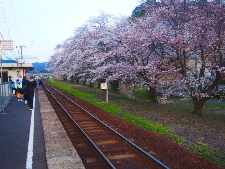 ooiwa-station-sakura1