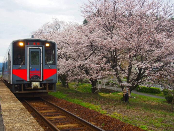ooiwa-station-sakura11