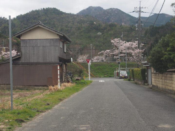 ooiwa-station-sakura9