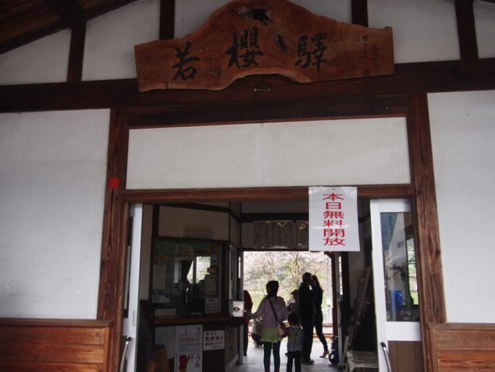 wakasa-sakura-festival28