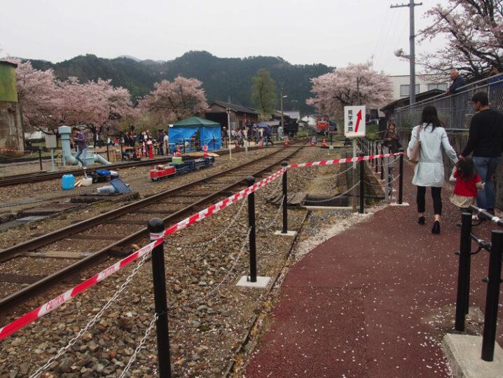 wakasa-sakura-festival31