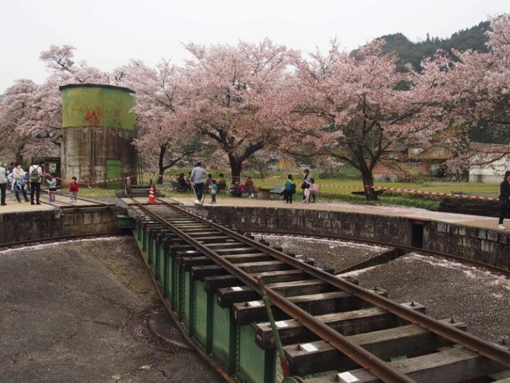 wakasa-sakura-festival40
