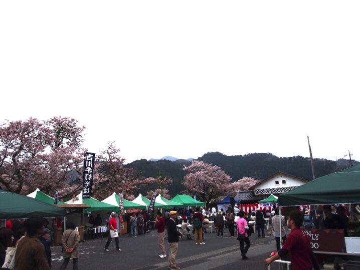 wakasa-sakura-festival60